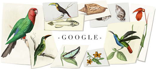 William John Swainson Google Doodle (+ Hummingbird), 8th October 2013
